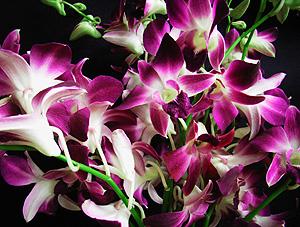 orkid02.jpg